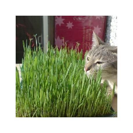 Травка для проращивания для кошек (пакет)