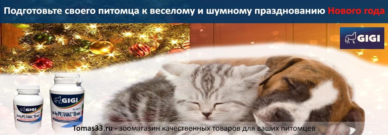 Подготовьте своего питомца к Новому году